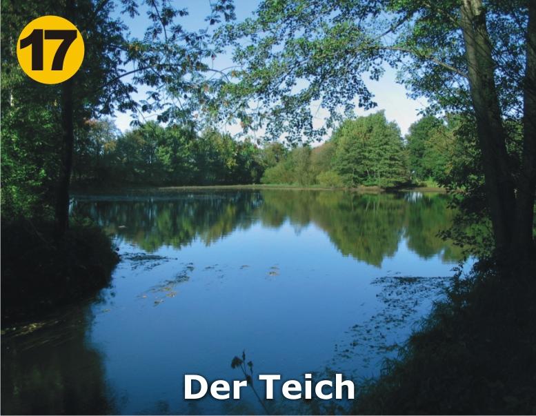 17_Der-Teich